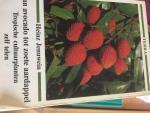Jenuwein, Heinz - Van Avocado tot zoete aardappel Tropische cultuurplanten zelf telen