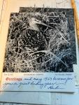 Brandt, Herbert - Alaska Bird Trails - Adventures of an Expedition by Dog Sled to the Delta of the Yukon River at Hooper Bay