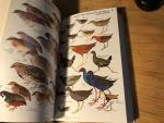 Pizzey, Graham - A Field Guide to the Birds of Australia