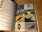 Ertel, RC - Birds in Africa - an introduction and survey to the Birdlife of Africa