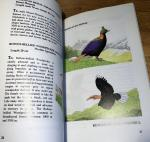 Inskipp & Robson - An Intruduction to Birdwatching in Bhutan