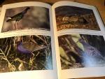 Dutch Birding, Ebels, Van den Berg, Van Loon - 16 nummers van tijdschrift Dutch Birding tussen 2008 en 2012