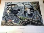 Heimans, E & Thijsse, Jac P - De Levende Natuur, jaar 4 compleet