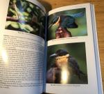 Hadden, Don - Birds and Bird Lore of Bougainville and the North Solomons