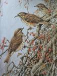 Bond, Terance James - Birds [The Paintings of Terance James Bond] signed + limited