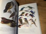 Holmes, D & K Phillipps - The Birds of Sulawesi - Images of Asia
