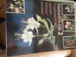 - Fuchsia's te kijk 2 geselecteerd op wit/roze wit/roze/lavendel