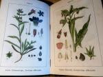 Sturms & Kraus - Sturm's Flora von Deutschland, 11. Band, 2 Hälfte