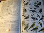 Mullarney/Svensson/Zetterström/Grant - Europese Vogels (de 'grote' ANWB)