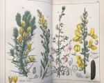OUDEMANS, C.A.J.A. - Natuurlijke Historie van Nederland, De Flora van Nederland, ten behoeve van het algemeen beschreven. 4 Delen (compleet)