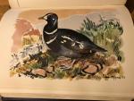 Salomonsen, Finn & Gitz-Johansen (platen) - The Birds of Greenland - Gronlands Fugle
