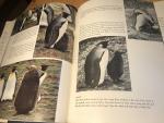 Pettingill, Olin Sewall - Another Penguin Summer